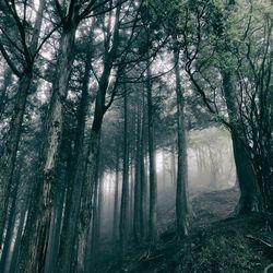 akira kosemura in the dark woods 2017